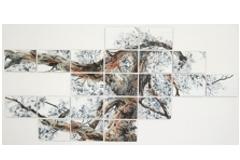 Tree of transparency 327 x 158 cm